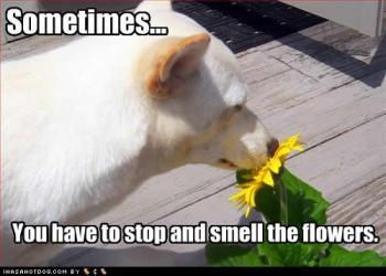 Às vezes é necessário parar e cheirar as flores.