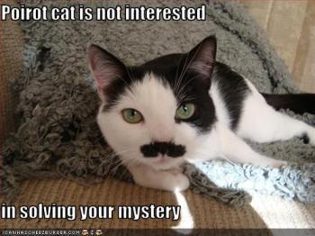 Gato Poirot não está interessado em resolver seu mistério