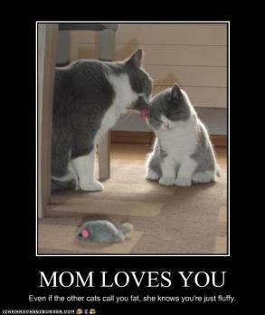 Mamãe ama você. Mesmo se os outros gatos te chamarem de gordo, ela sabe que é só fofura.